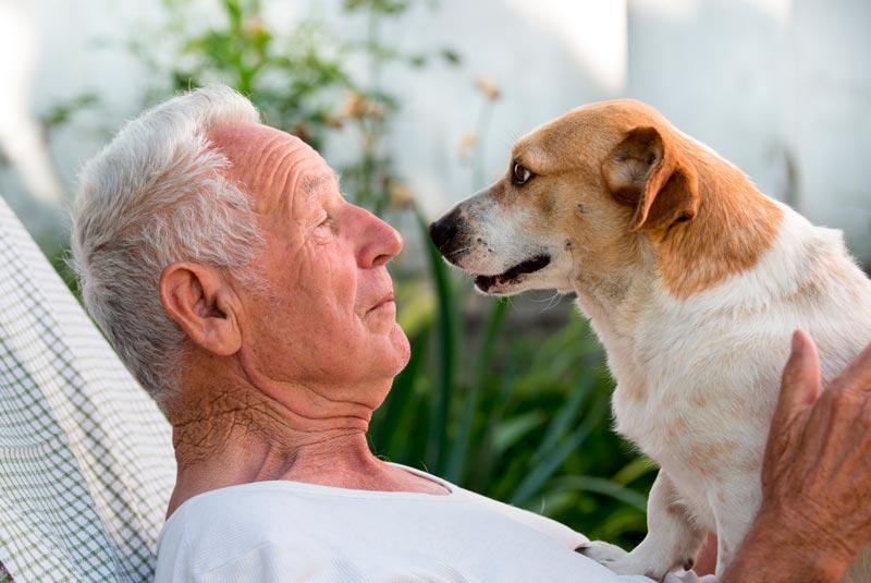 animales de compañia para amyores señor y perro
