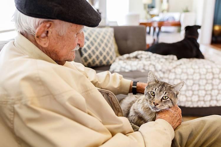 Animales de compañía para mayores