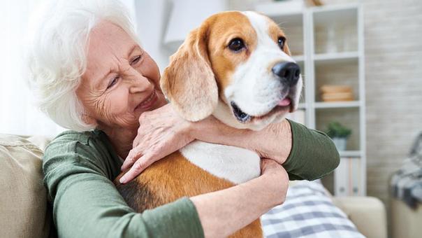 animales de compañia para mayores perro